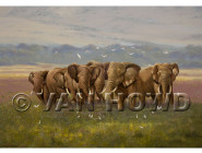 Bulls of Ngorongoro