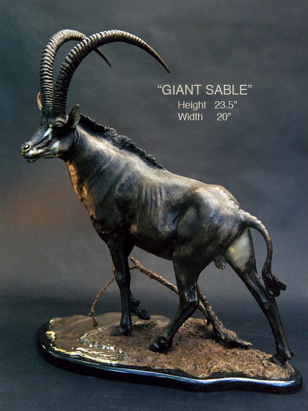 Giant Sable   Douglas ...
