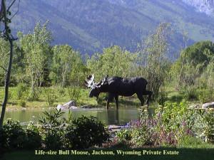Moose at Jenny Lake