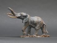 Mini African Bull